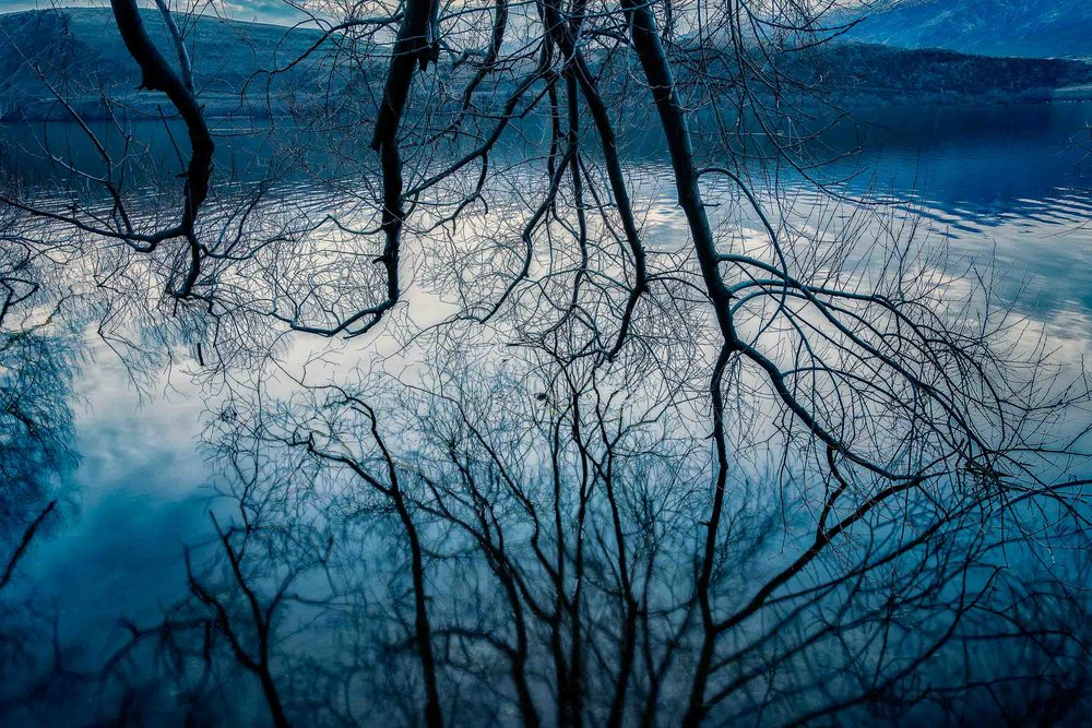 Tree branches    at    twilight    reflected in the waters of    Lake Hayes    near    Arrowtown, New Zealand   .