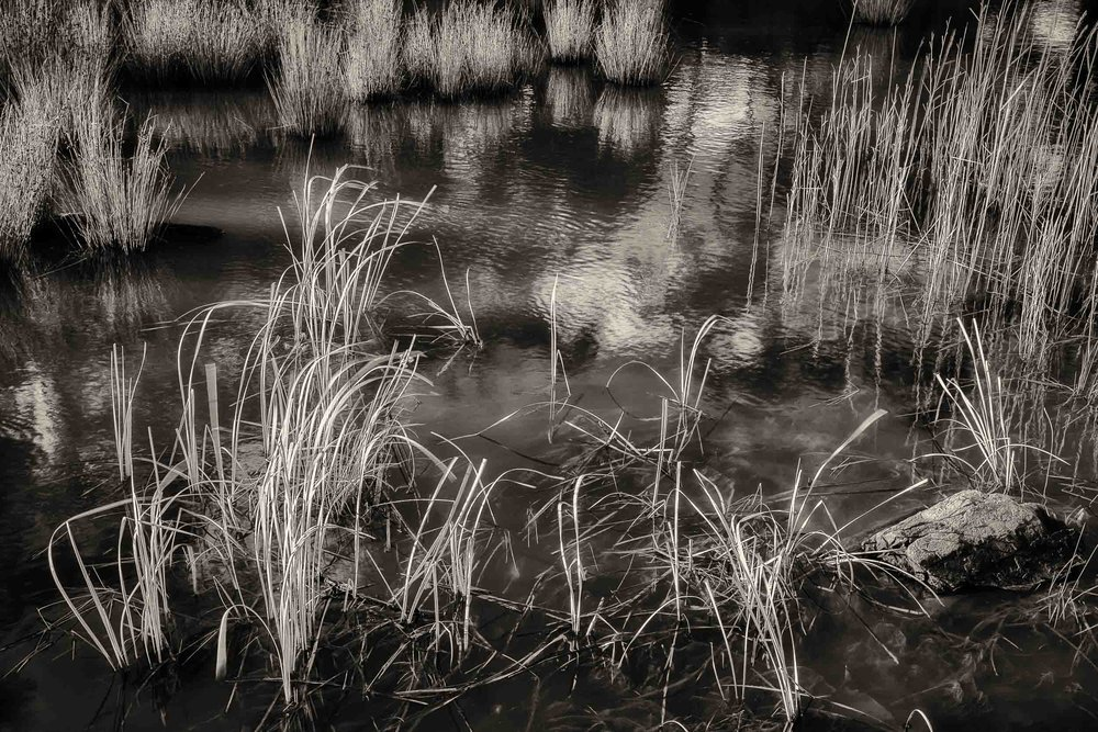 Beautiful silver light illuminating reeds on the    Expedition Pass Reservoir    near    Chewton, Australia   .