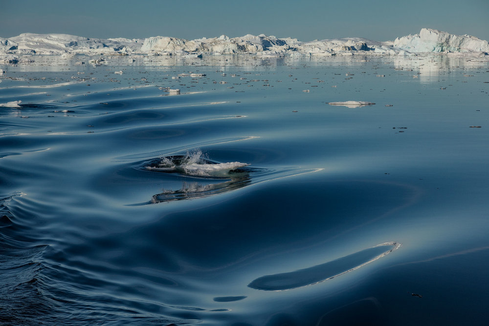 Sailing over the pristine waters of the    Ilulissat Icefjord    in    Greenland   .