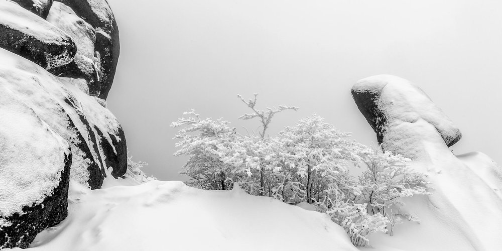 A delicate image on the top of a    snow covered ridge    on    Huangshan    (i.e., Yellow Mountain) in    East China   .