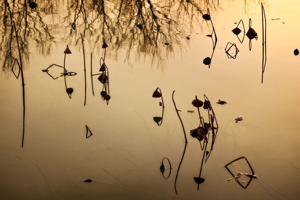 A beautiful, abstract image of    reeds on water    in the famous    Hongcun Village    in Anhui Province,    China   .