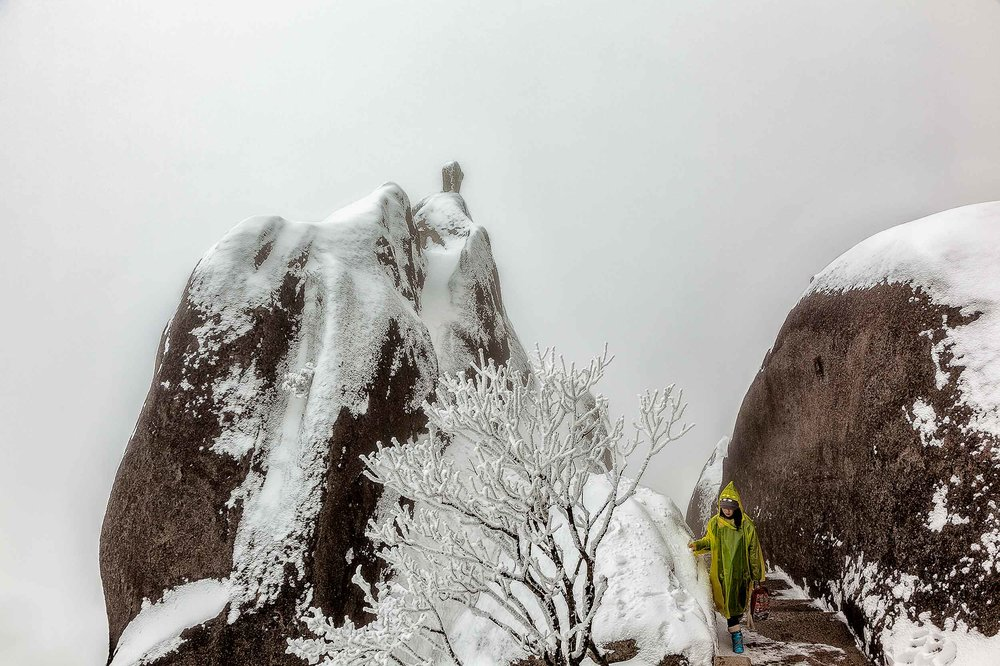 A visitor to the    magnificent Huangshan    (i.e., Yellow Mountain) in China moves gracefully through the    mist shrouded landscape   .
