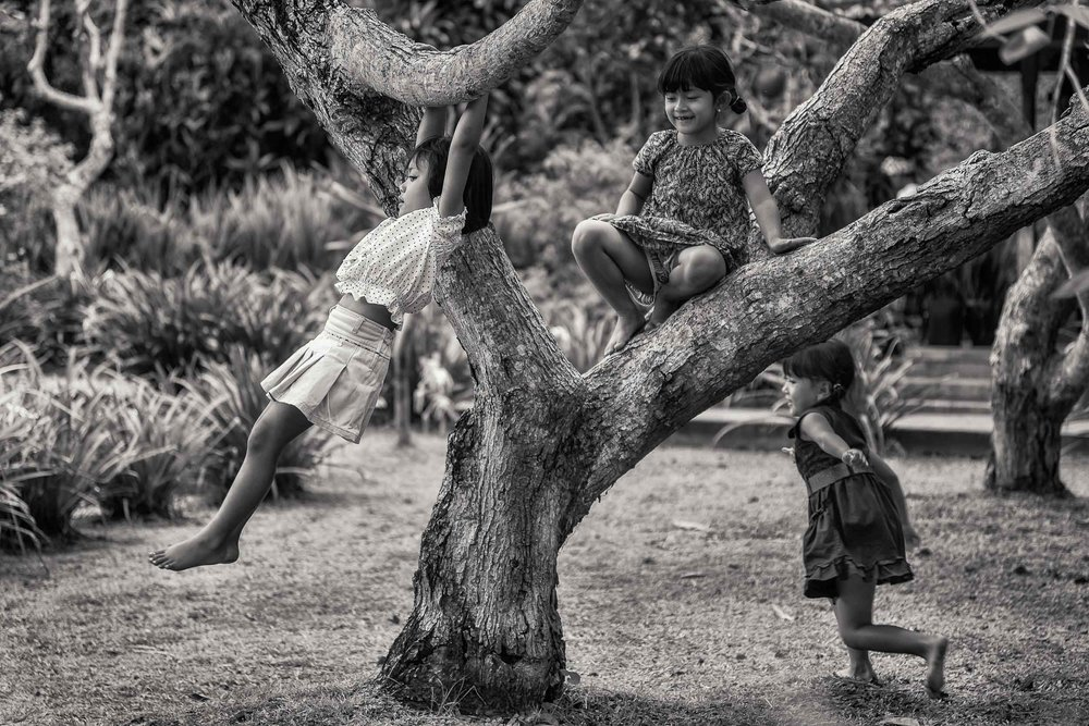 A    candid moment    of t   hree young girls at play   , on and around a tree, in the grounds of a Hindu Temple complex in    Bali, Indonesia   .