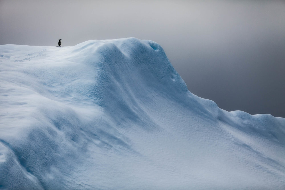 A    solitary penguin    in the harsh, but beautiful landscape near    Paradise Harbor    in    Antarctica   .