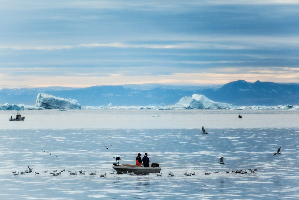 Local fisherman and sea birds on the    Ilulissat Icefjord    near the town of    Ilulissat    in    Western Greenland   .