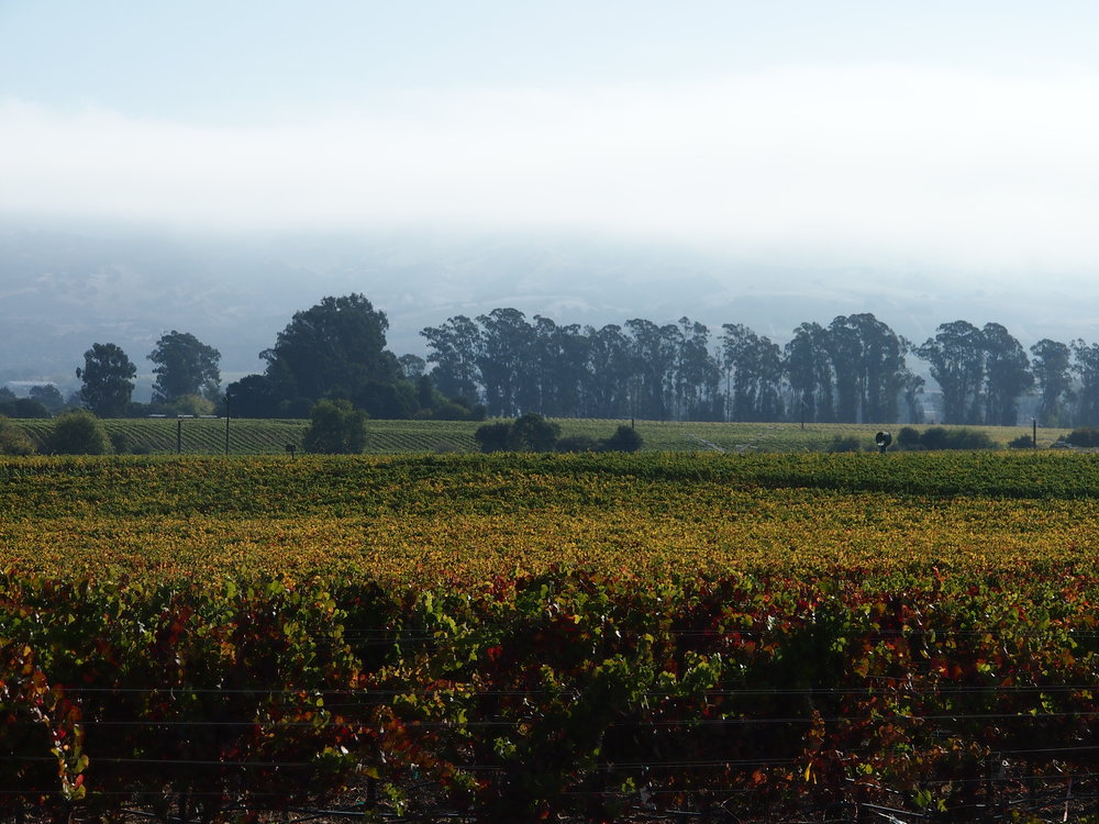 Scholium-Wine-Abe-Schoener-Vineyard-View.jpg