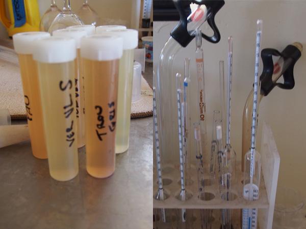 Scholium-Wine-Abe-Schoener-Wine-Science.jpg