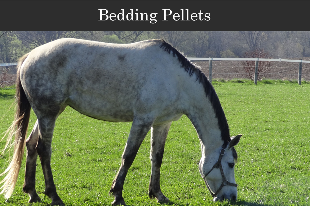 Gildale Softwood Bedding Pellets for horses and animals