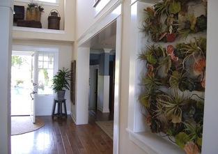 Vertical Succulents