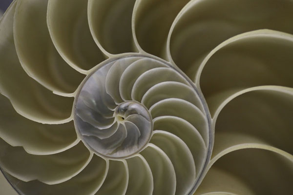 spiral-from-knowledgenet-small.jpg
