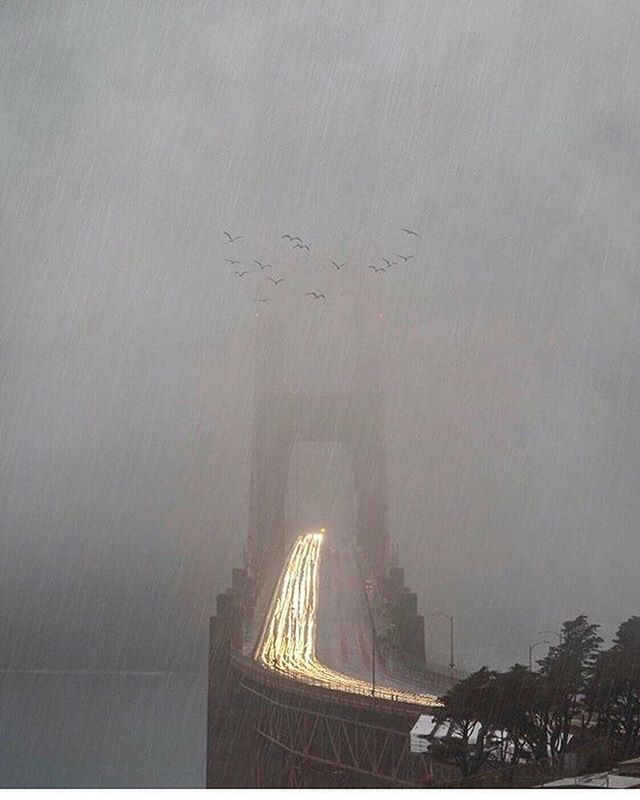 San Francisco - beautiful rain or shine. #rainyseason 📸: @albertjonlee via @sfgate  #goldengate #goldengatebridge #sf #sanfrancisco #regram #bayarea #citylife #instagood #instalike #picoftheday #ggbridge #letitrain #rain #rainyday #sanfrancisco #sf #bayarea #lovesf #sflove #citybythebay #onlyinsf