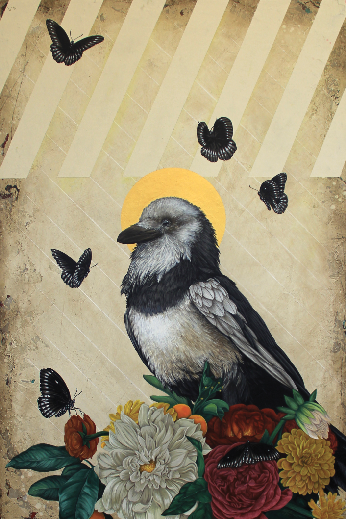 Pied Raven, Circa 1948