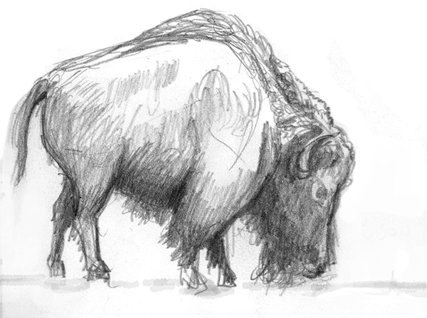 Bison - Sketchbook - 2018