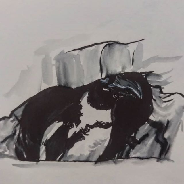 Here's a penguin chillin' under a rocky eave. Penguins are super fun to draw. Especially with the new brush pen I just acquired.  #penguin #penguindrawing #art #sketch #sketchbook #dailysketches #dailysketch #sketches #sketchdaily #drawing #penandinkdrawing #penandink #animal #animalart #wildlifeart