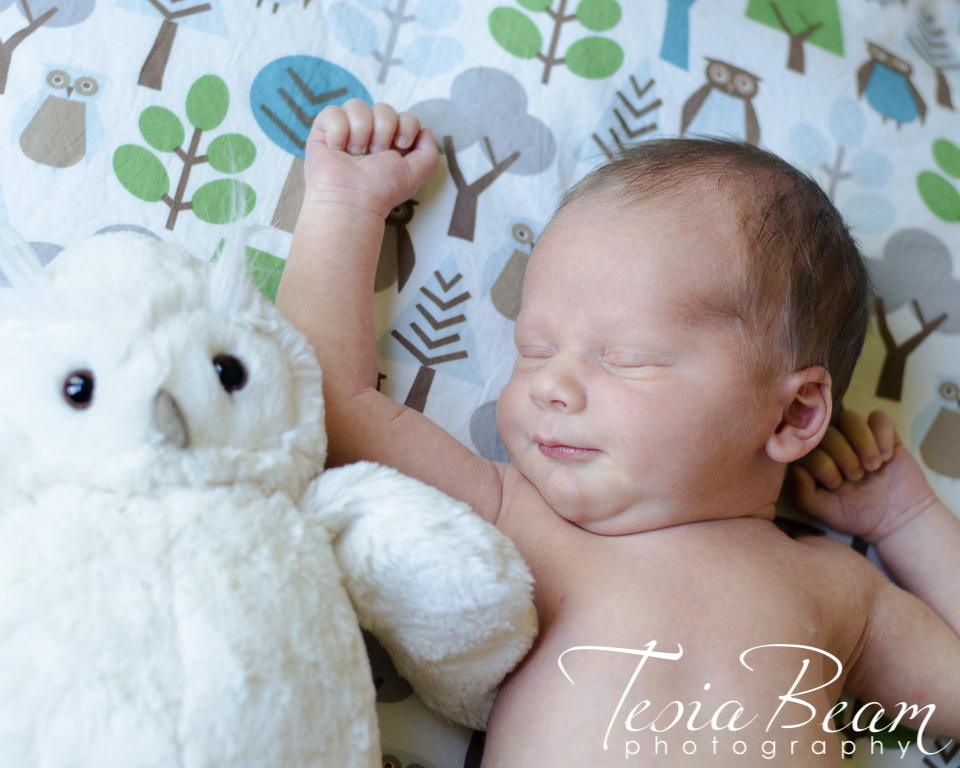Newborn with his owl (c)Tesiabeamphotography.com