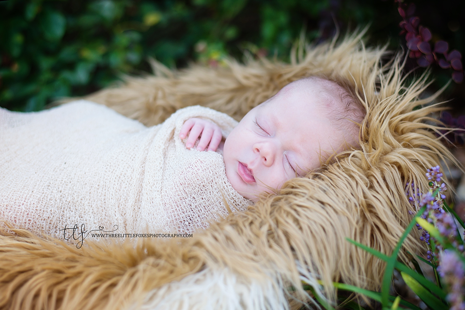 three-little-foxes-photography-newborn-photographer-columbia-missouri-star-wars