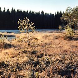 ramossa_visitfinland_visitporvoo_nature_forest_lake