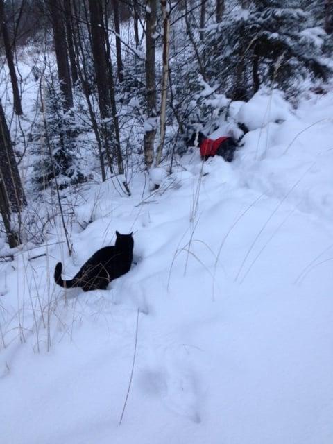Susi kissa ei malta olla seuraamatta lumesta huolimatta.