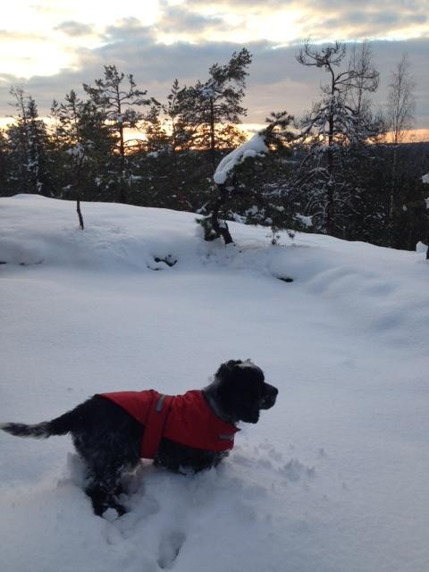 Siirin kanssa mäen laella, lunta tuli jälleen reippaasti.