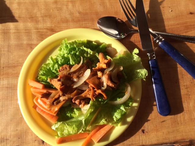 Kaikki ruokatarpeet omasta takaa. Sienet metsästä. Salaatti, porkkanat, sipuli, kaikki omasta kasvimaasta.