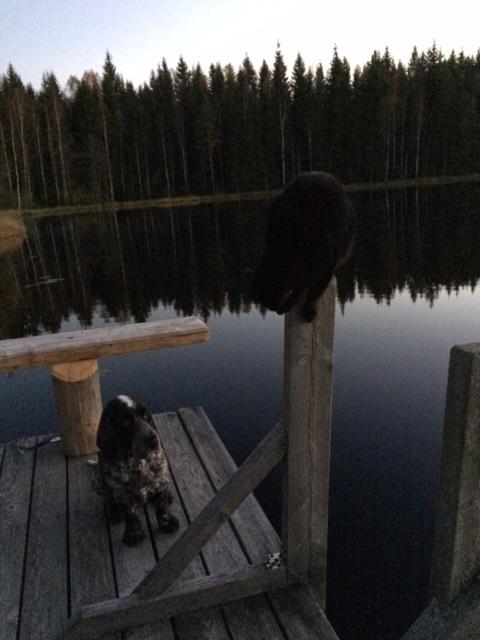 Etsi kuvasta musta kissa.