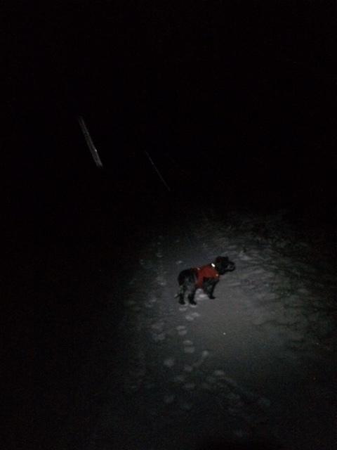 Tältä näyttää pimeä metsätie.
