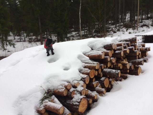 Tässä ovat lumen alla tulevat aidantolpat.