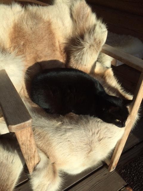 Susi relaa porontaljalla.