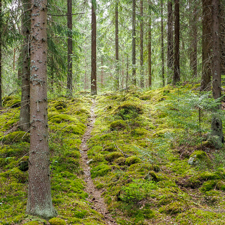 Nature trail in a moody forest, Finnish nature, Råmossa Lodge