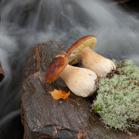 Mushrooms on a rock by a brook, Finnish nature, Råmossa Lodge