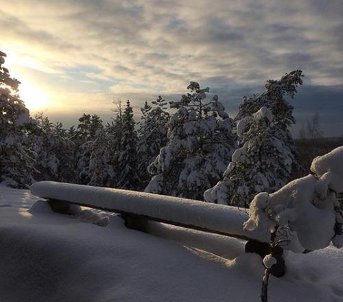 Luminen metsämaisema auringossa, Råmossa Lodge