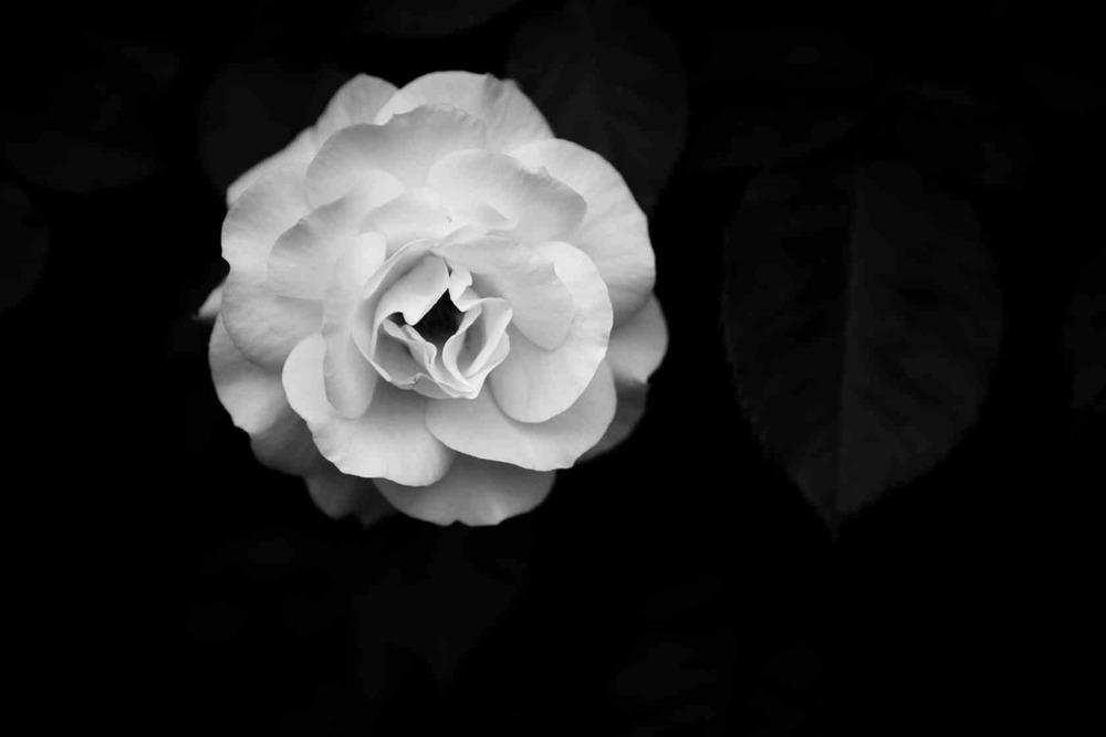 Spring_(2014)0504_IMG_9652.CR2.jpg