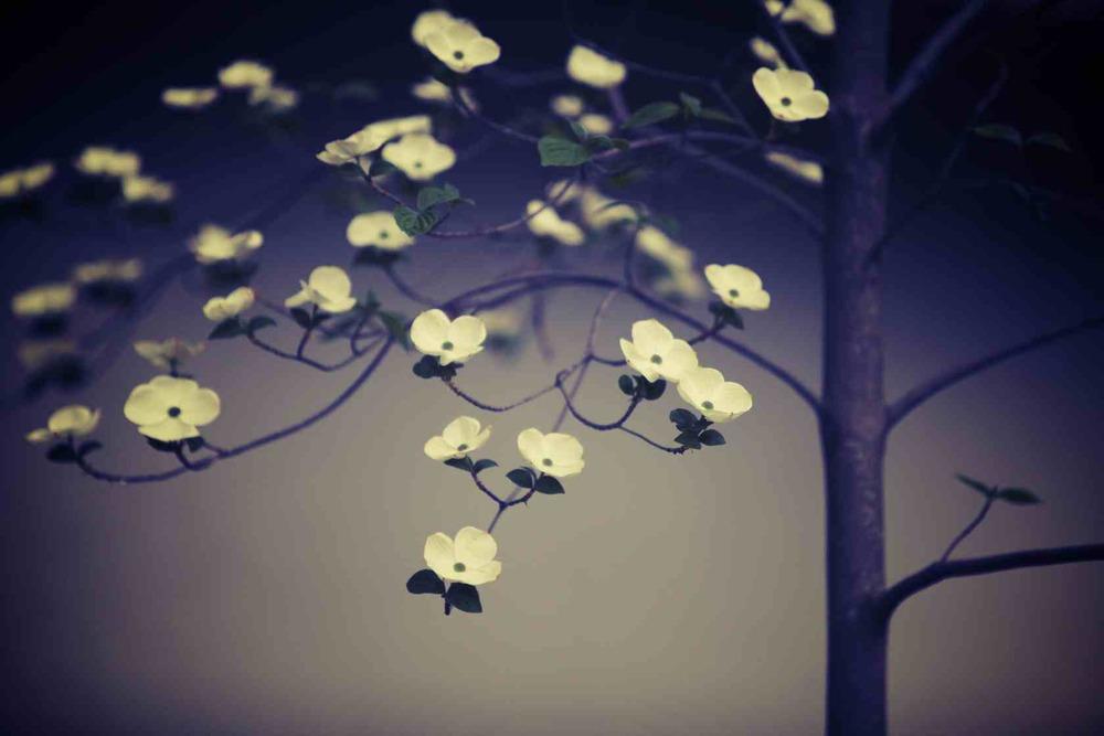 Spring_(2014)0504_IMG_9691.CR2.jpg