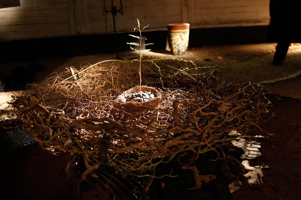 herzog_7h nest in spring.jpg