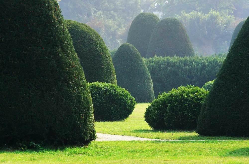 homepage topiary.jpg