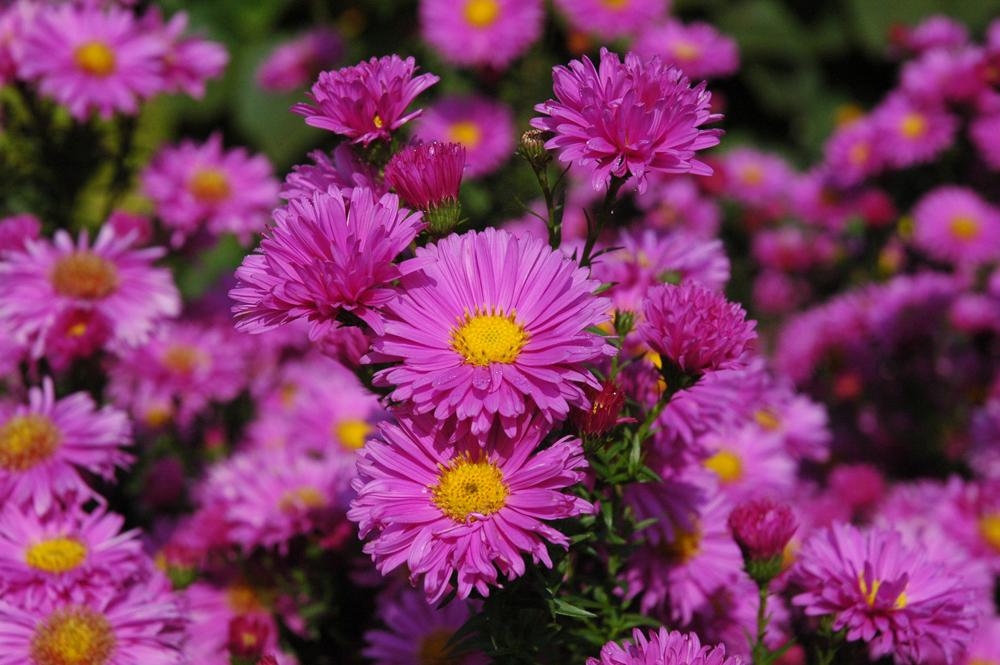 june-flowers.jpg