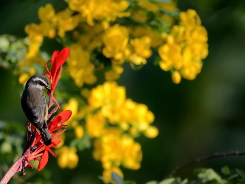 - birdwatching