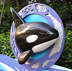 Sea World Orlando-2
