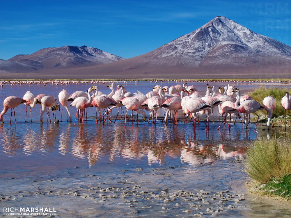 Laguna Colorado, Bolivian Altiplano