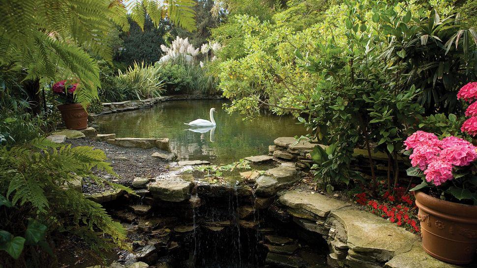 001231-03-_Swan_Lake.jpg