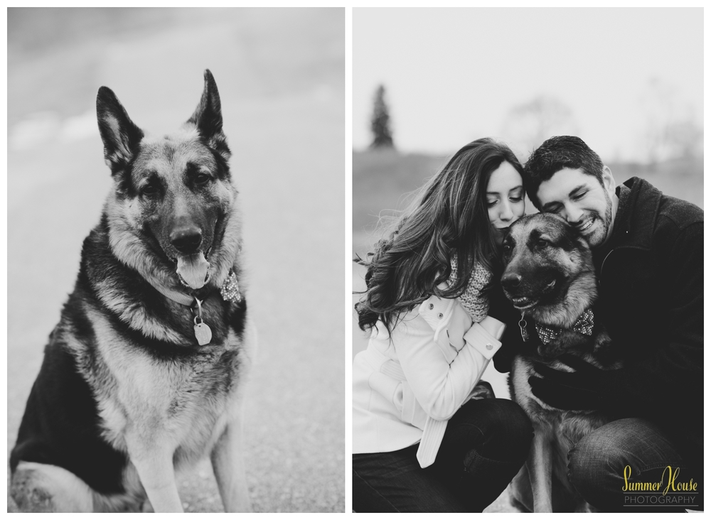 york pa dog photographer