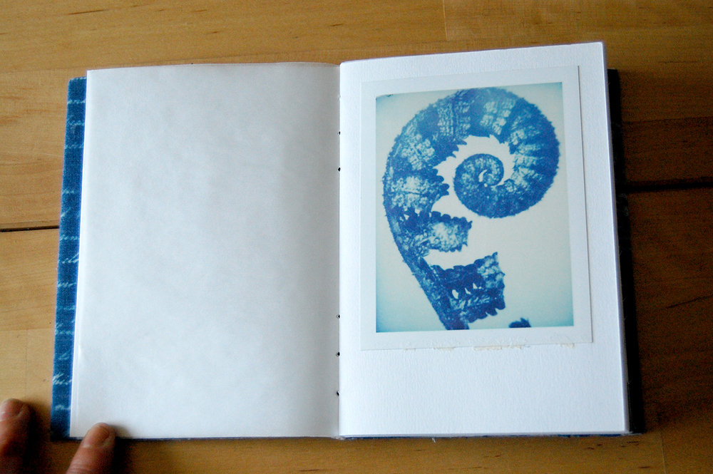 botanical images are polaroid reproductions of originals by karl blossfeld.