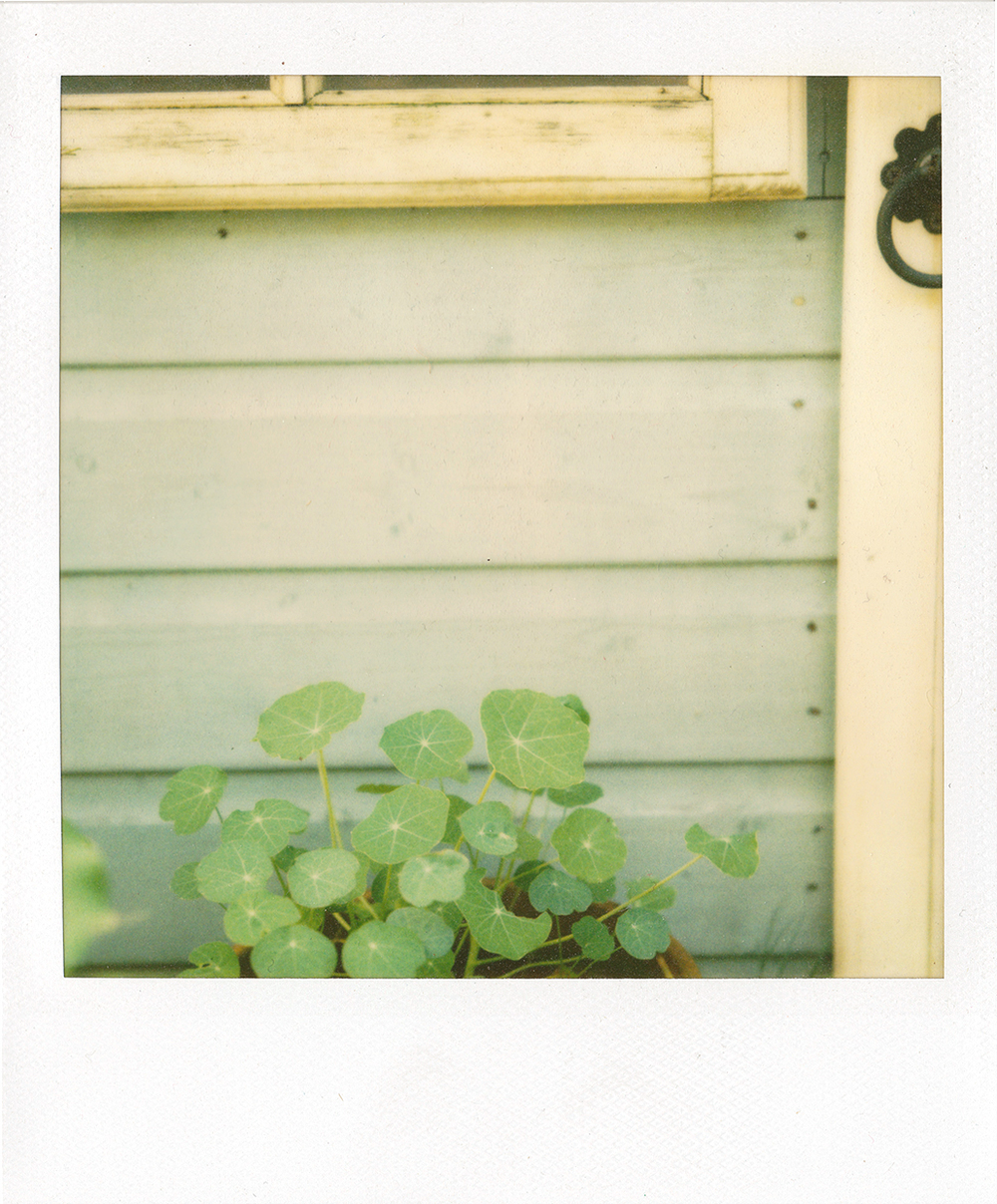 polaroid 600 film with pack filter.