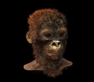 MonkeyHead_Gallery.jpg