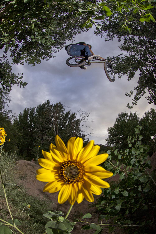 sunflowertbog.jpg