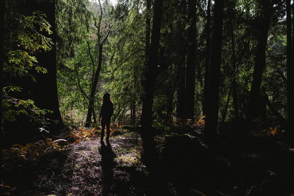 meadow-33.jpg