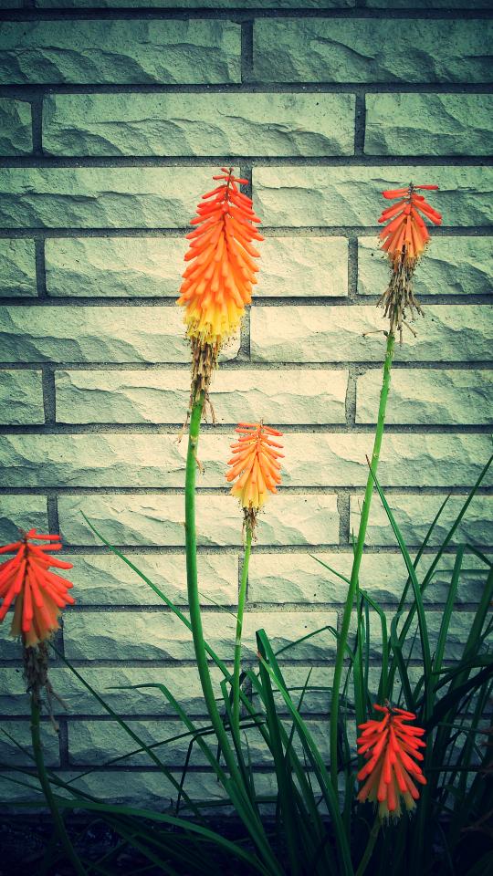 firework flowers.JPG