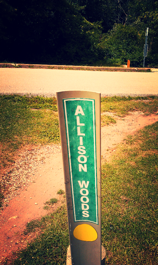 allison woods des plaines river trail 2.jpg