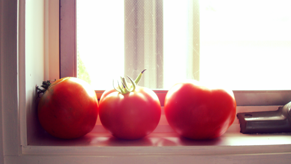 ripen tomatoes on the window sill.JPG