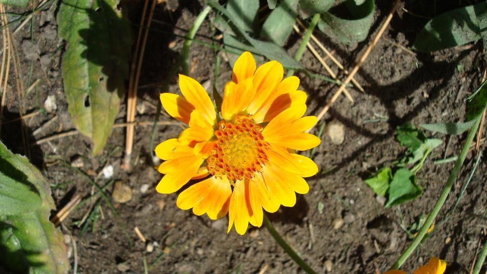 sept flowers 1.JPG